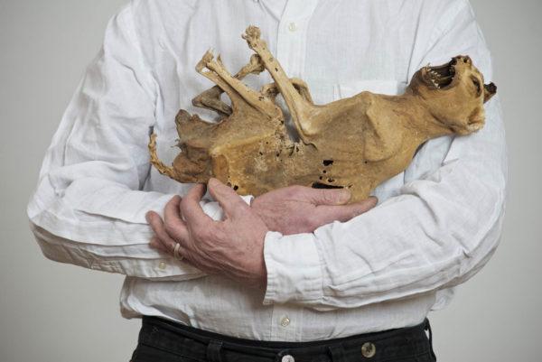Lois Weinberger, Ohne Titel, 2014 Katzenmumie, 18. Jahrhundert, Fotoarbeit, 60 x 90 cm Foto: Paris Tsitsos © Studio Weinberger